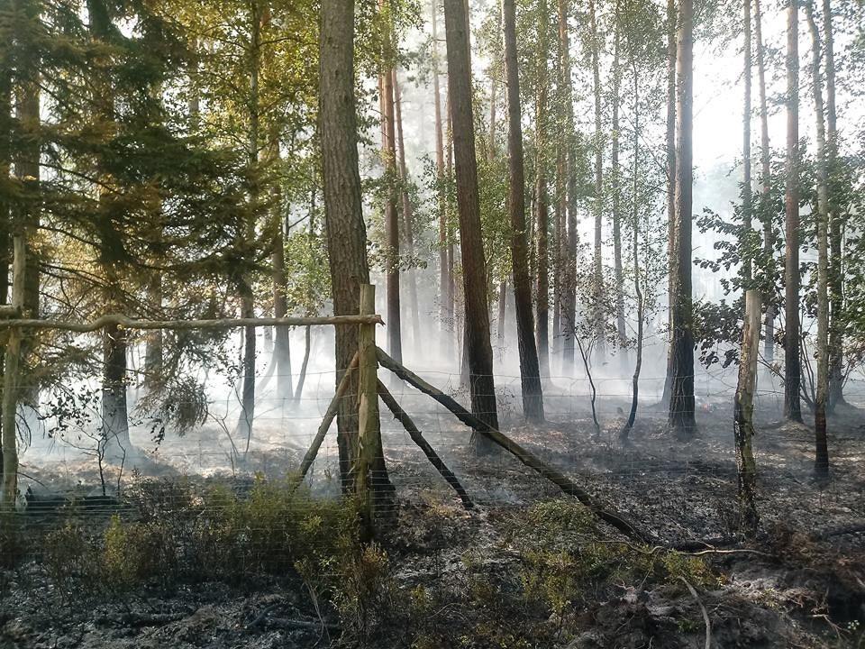Pożary lasu w Węglińcu. Prawdopodobna przyczyna: podpalenie z-index: 0