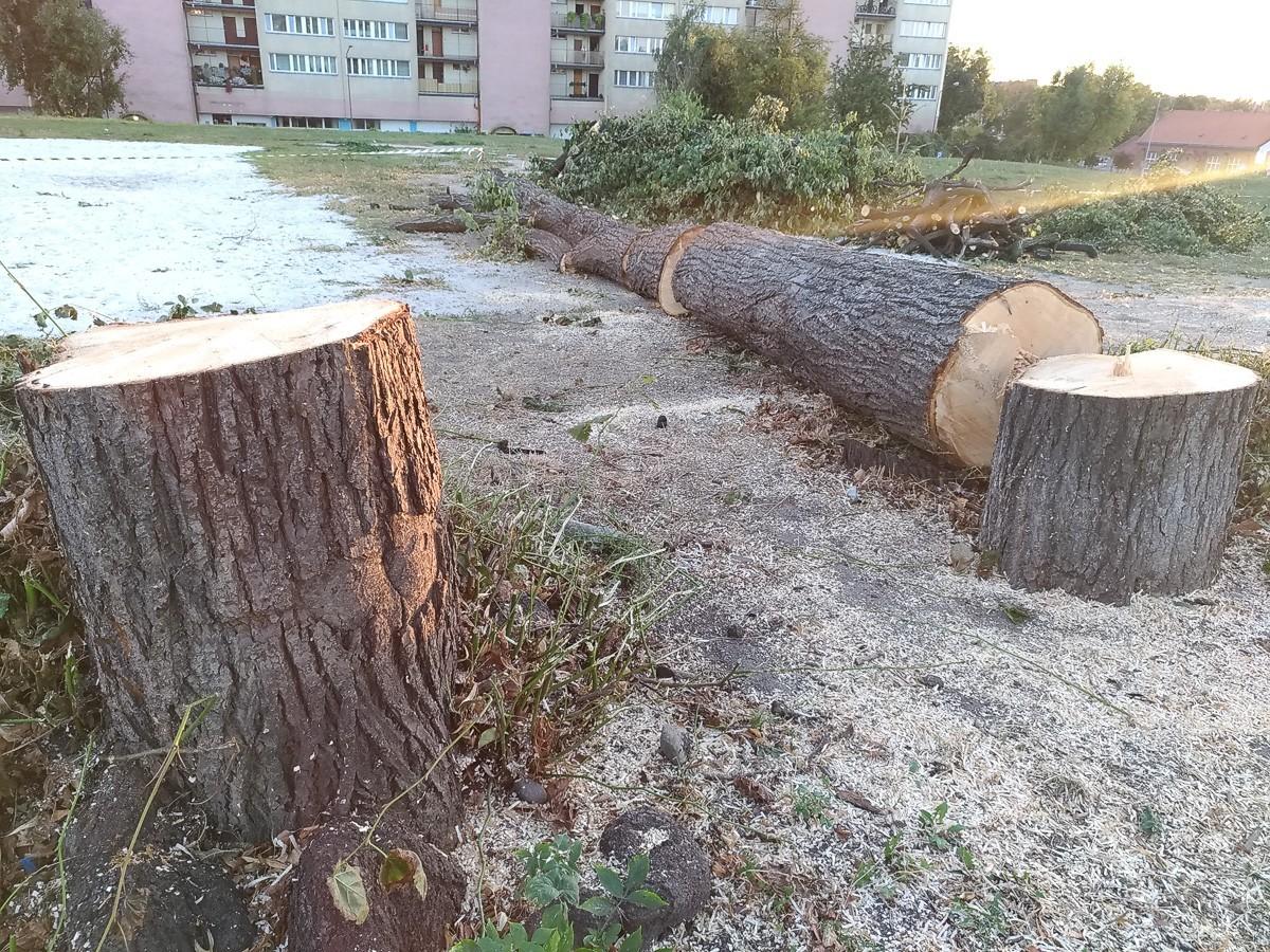 Wycięli 19 drzew na Popiełuszki. Rusza budowa hotelu