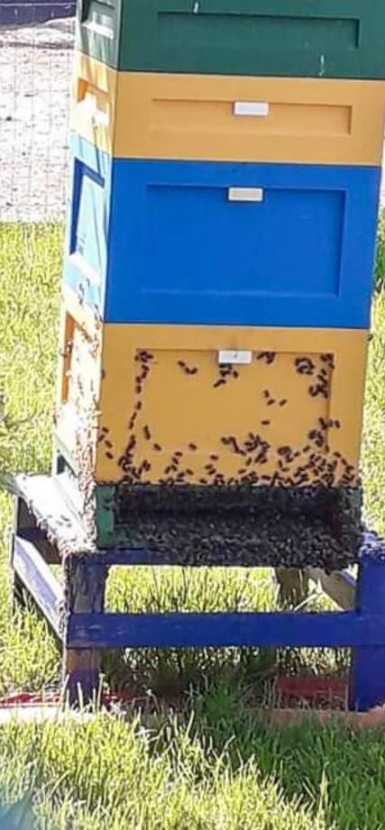 Wytruli pszczółki mieszkańcowi Czernej
