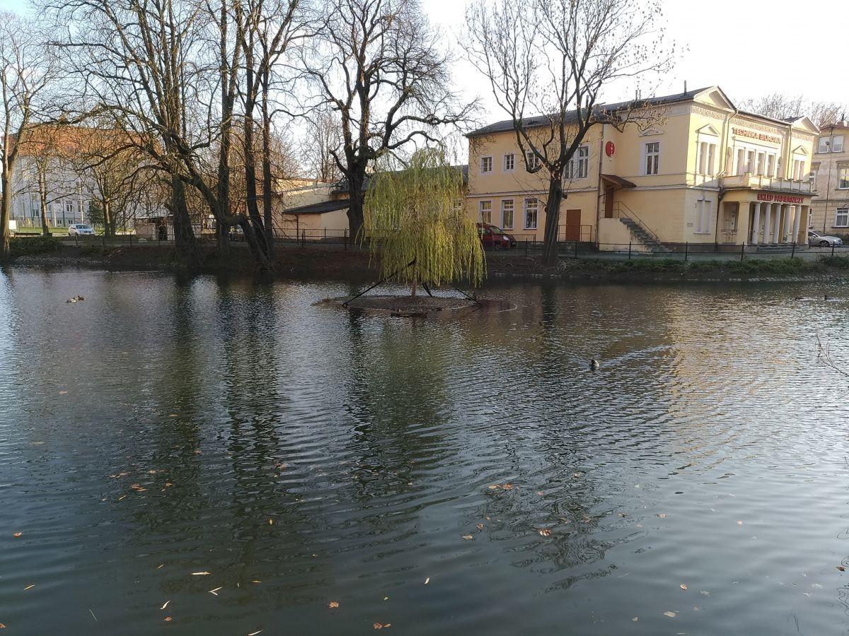Podwyższony poziom wody w miejskim stawie