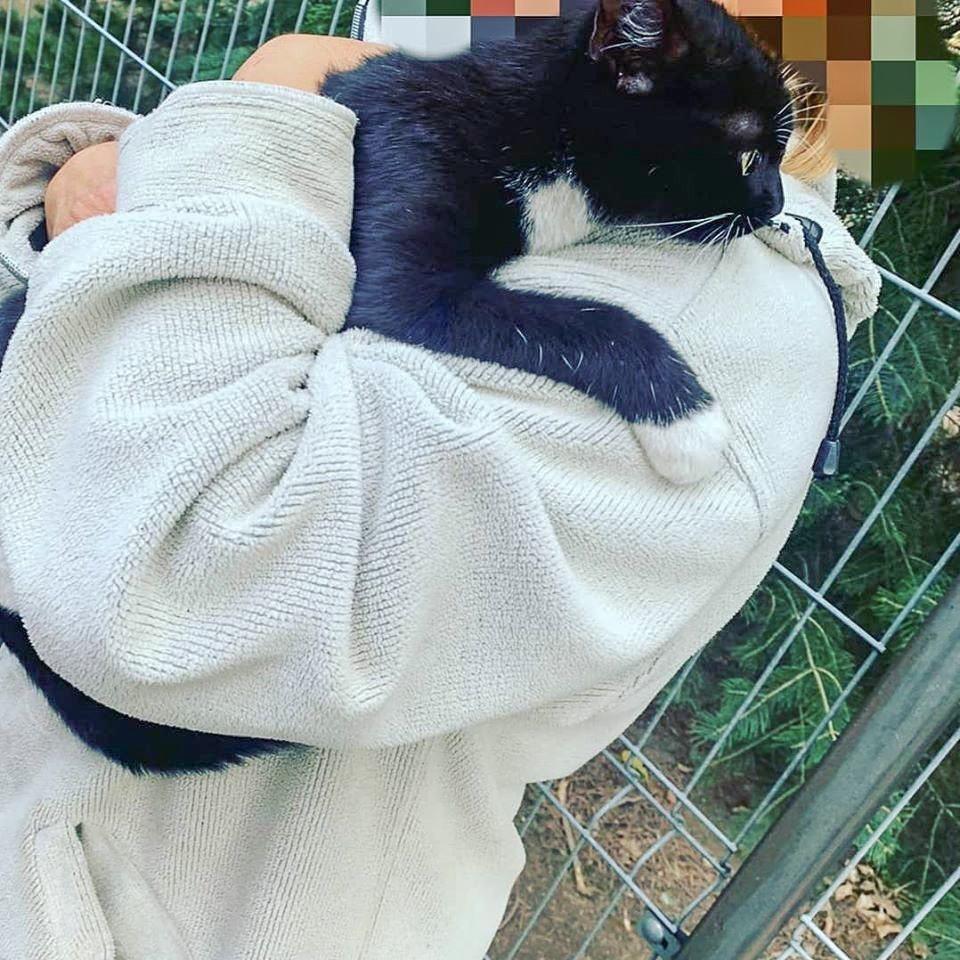 Strażacy z Nowogrodźca uratowali kota, który utknął na drzewie