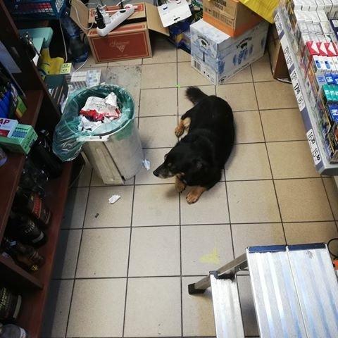 Pies wyrzucony przy sklepie Lewiatan
