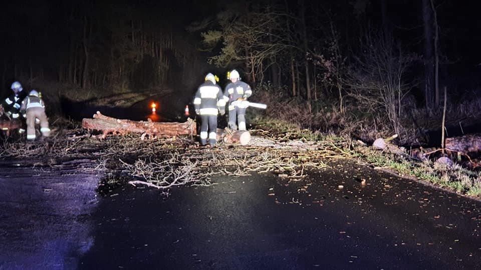 Strażacy z Trzebienia usuwają powalone przez huragan Julia drzewa