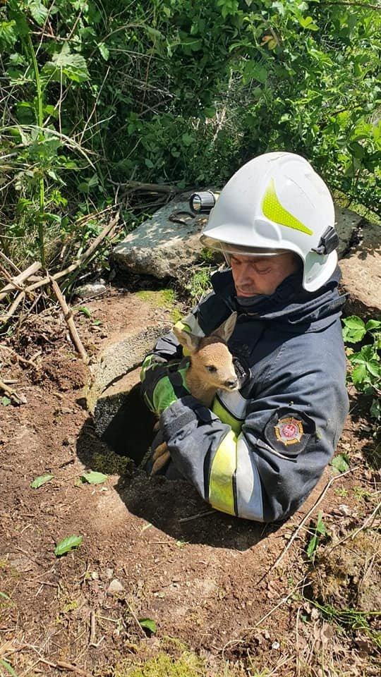 Strażacy z Trzebienia uratowali sarenkę