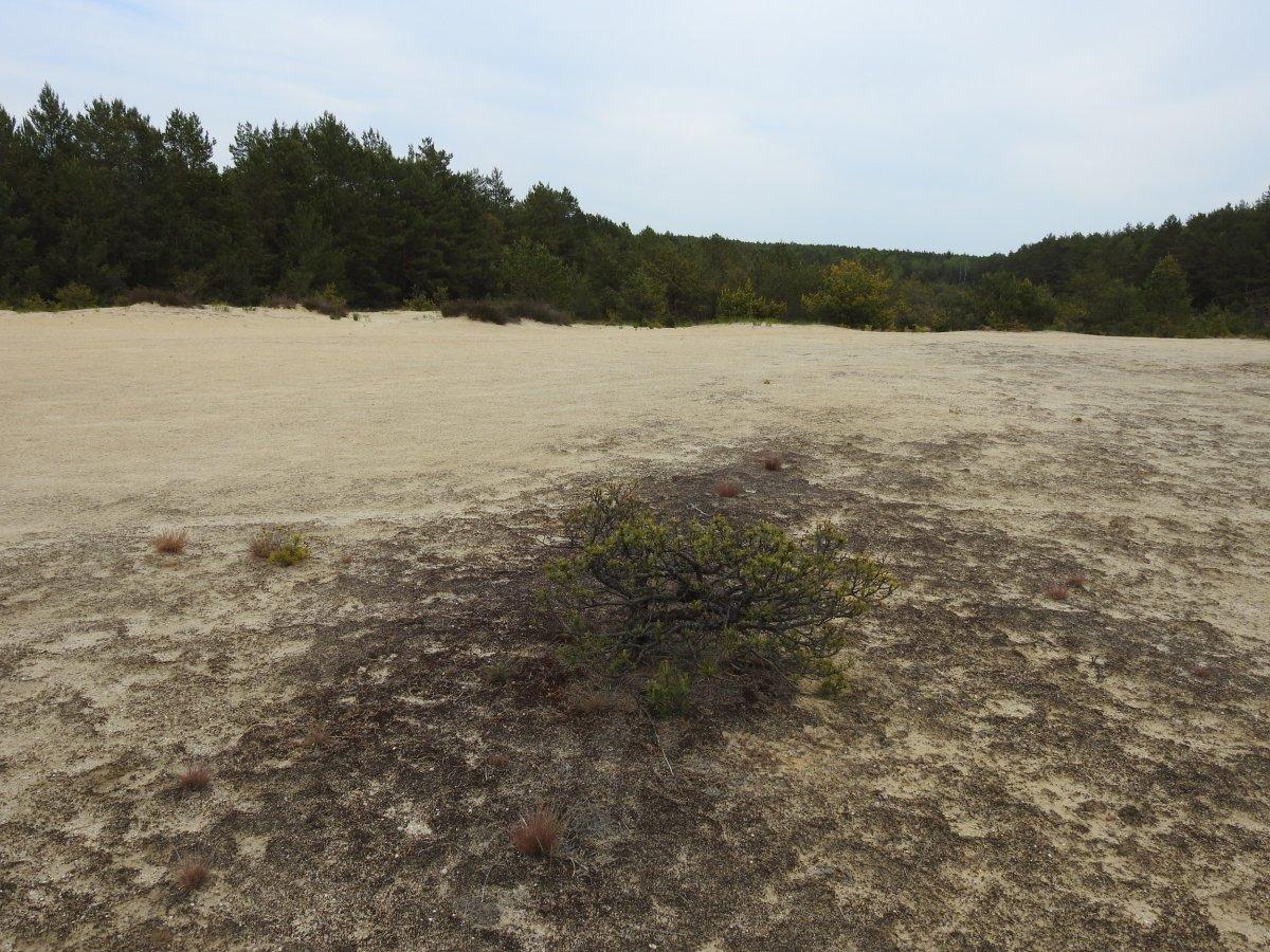 Wędrujące wydmy. Turystyczna atrakcja powiatu bolesławieckiego