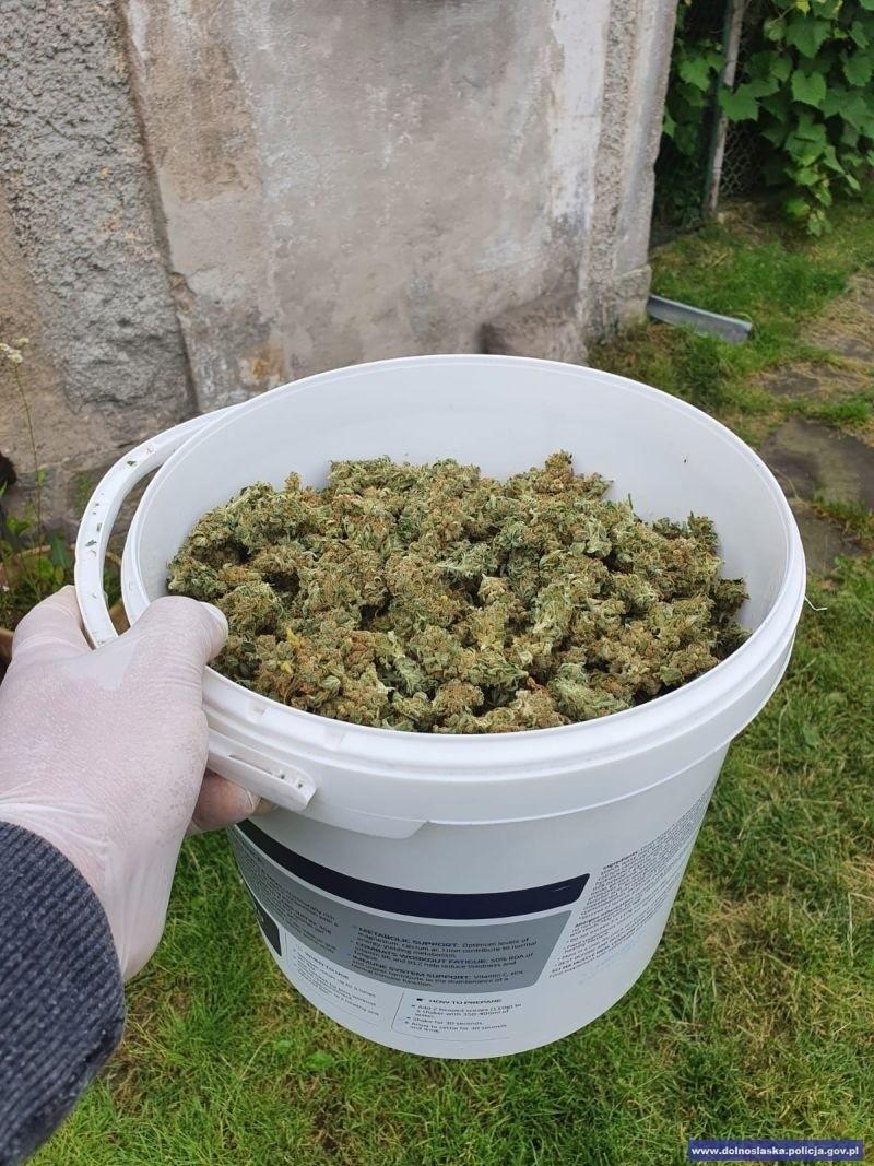 Narkotyki przechwycone przez kryminalnych z Bolesławca