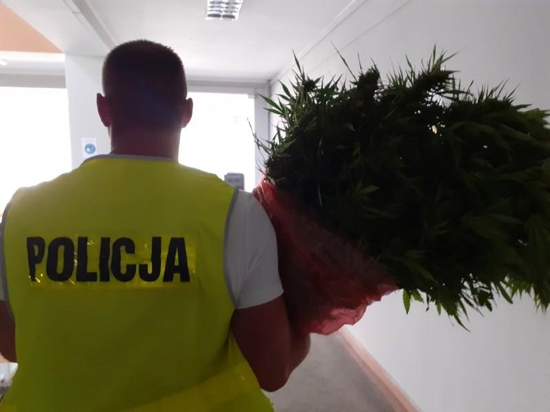 Marihuana przechwycona przez bolesławiecką policję