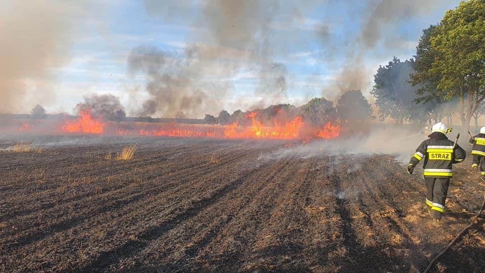 Pożary na polach w Tomaszowie Bolesławieckim i Chościszowicach