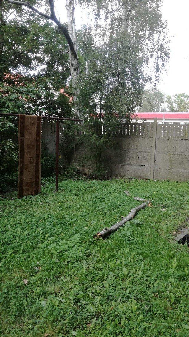 Przy alei Tysiąclecia spadają konary z uschniętych drzew. Może dojść do tragedii