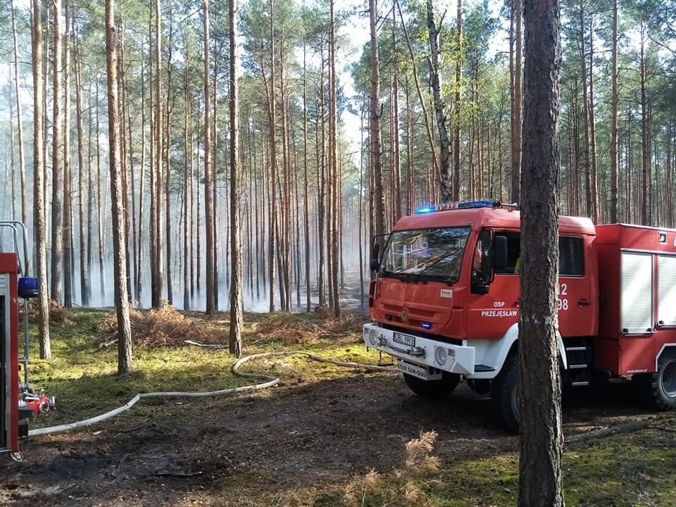 Akcja straży pożarnej w lesie w Bronowcu (gmina Osiecznica, powiat bolesławiecki)