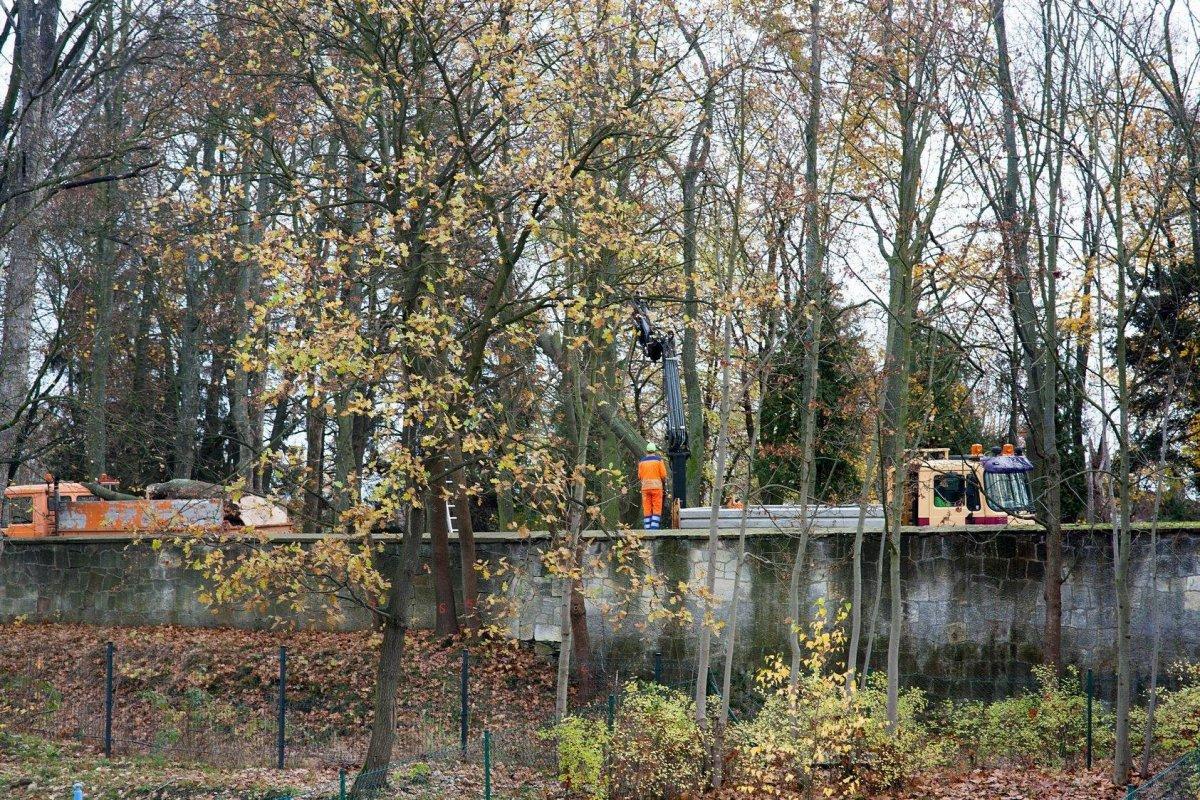 Wycinka drzew przy cmentarzu na Lubańskiej