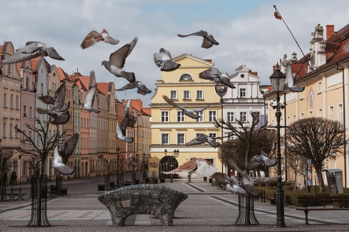 Nagrodzone zdjęcia w kalendarzu miejskim
