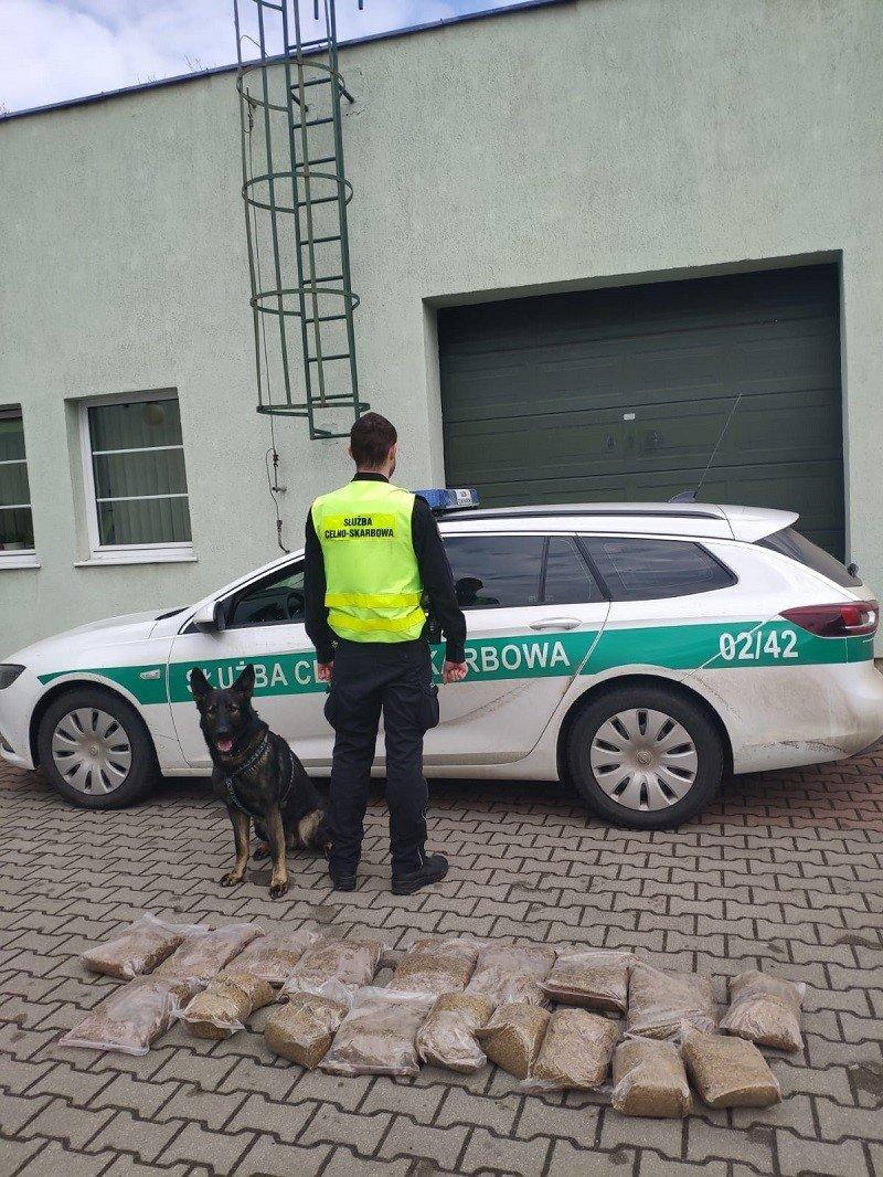 Działania KAS i Straży Granicznej