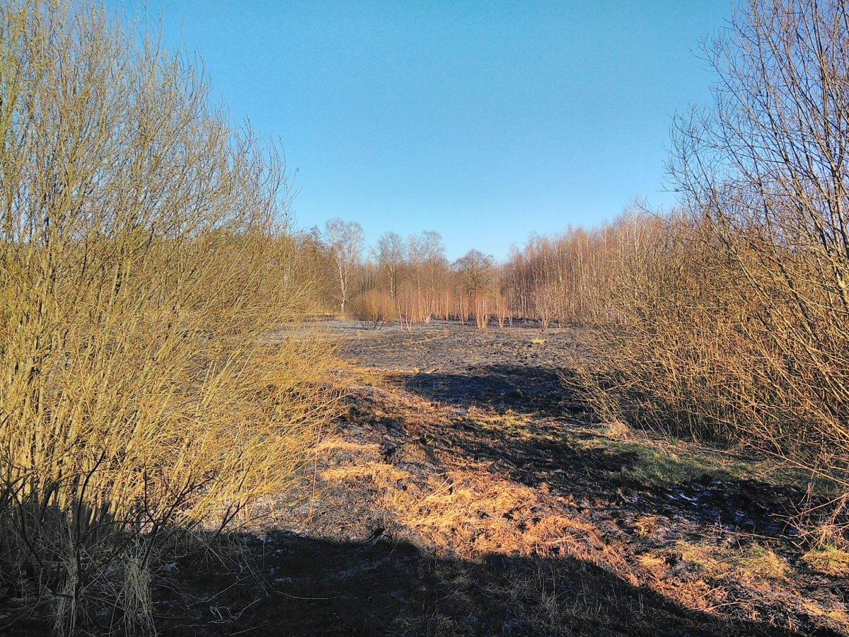 Pożar nieużytków koło Wierzbowej