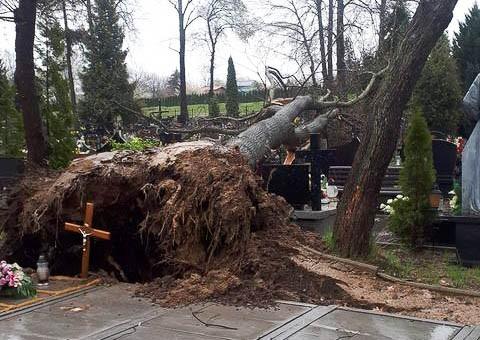 Powalone drzewo na cmentarzu