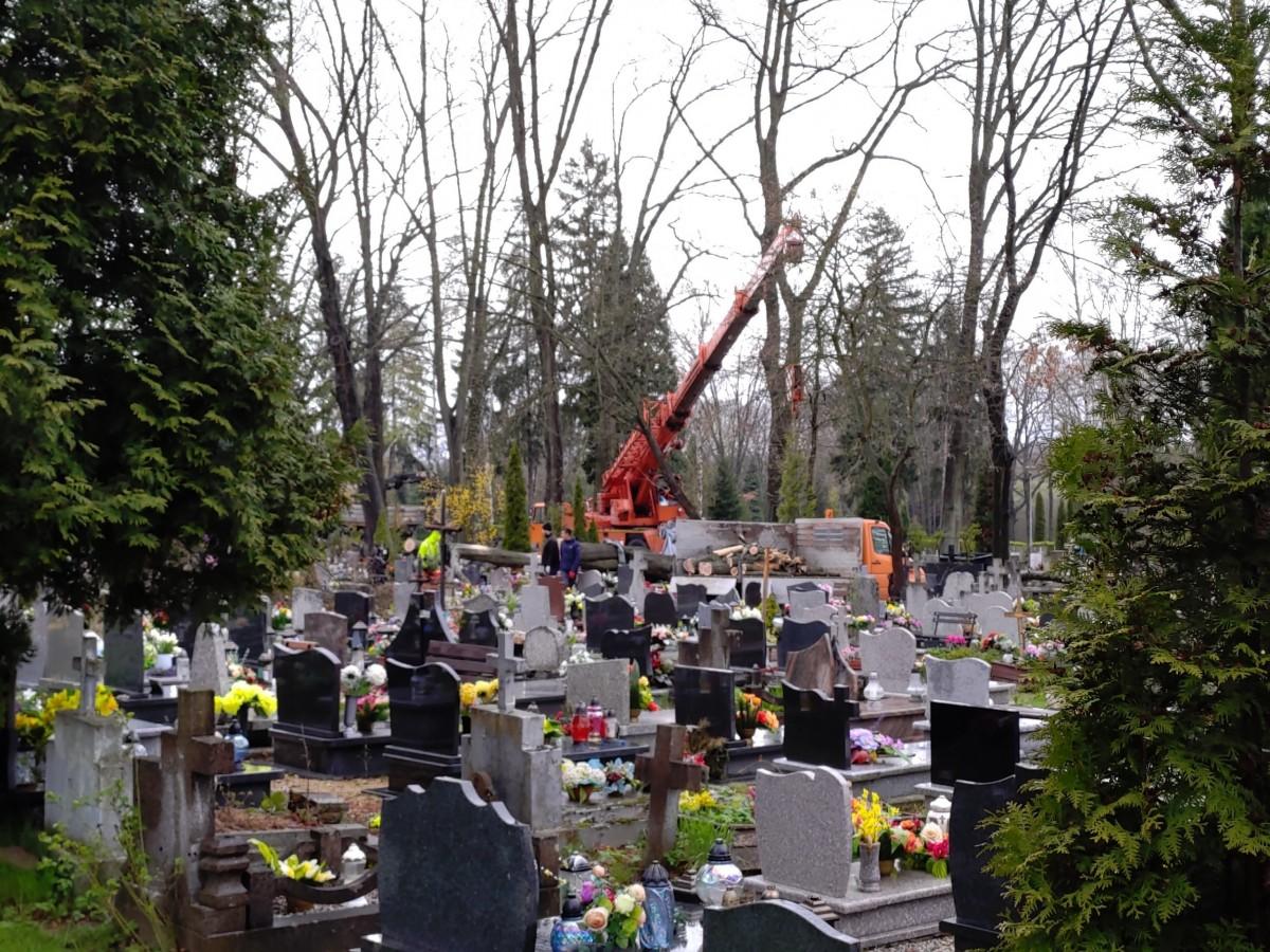Usuwanie powalonego drzewa na cmentarzu