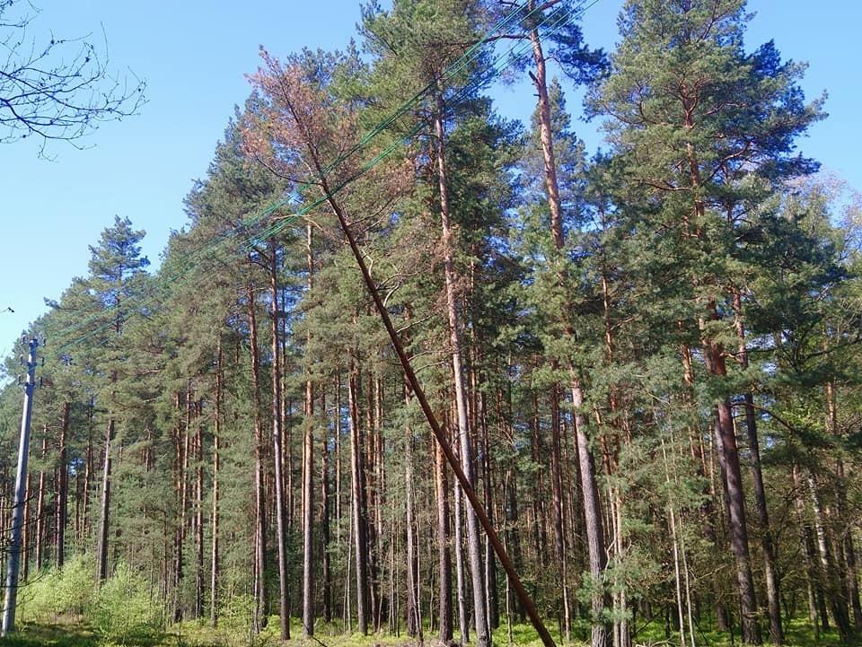 Drzewo oparte na liniach energetycznych