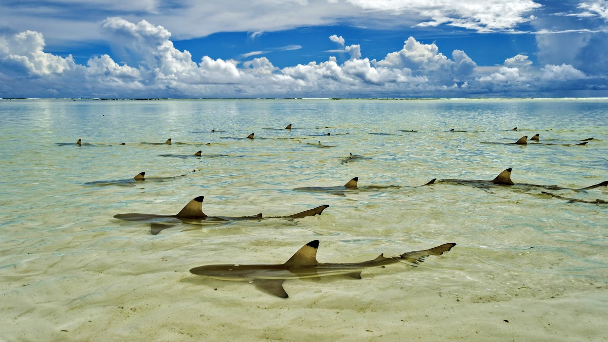 Atol Aldabra