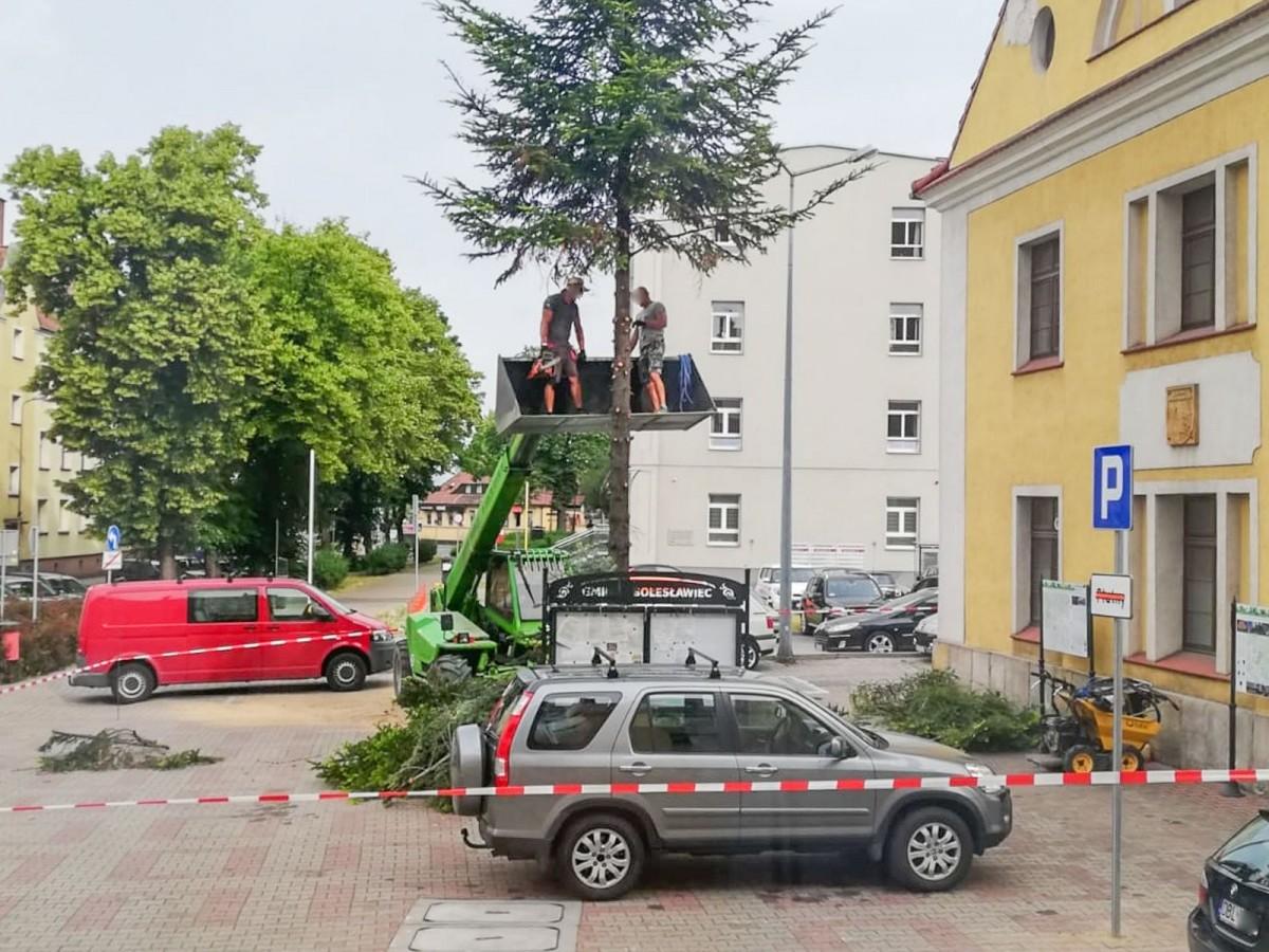 Robotnicy podczas wycinki drzewa przy ul. Teatralnej