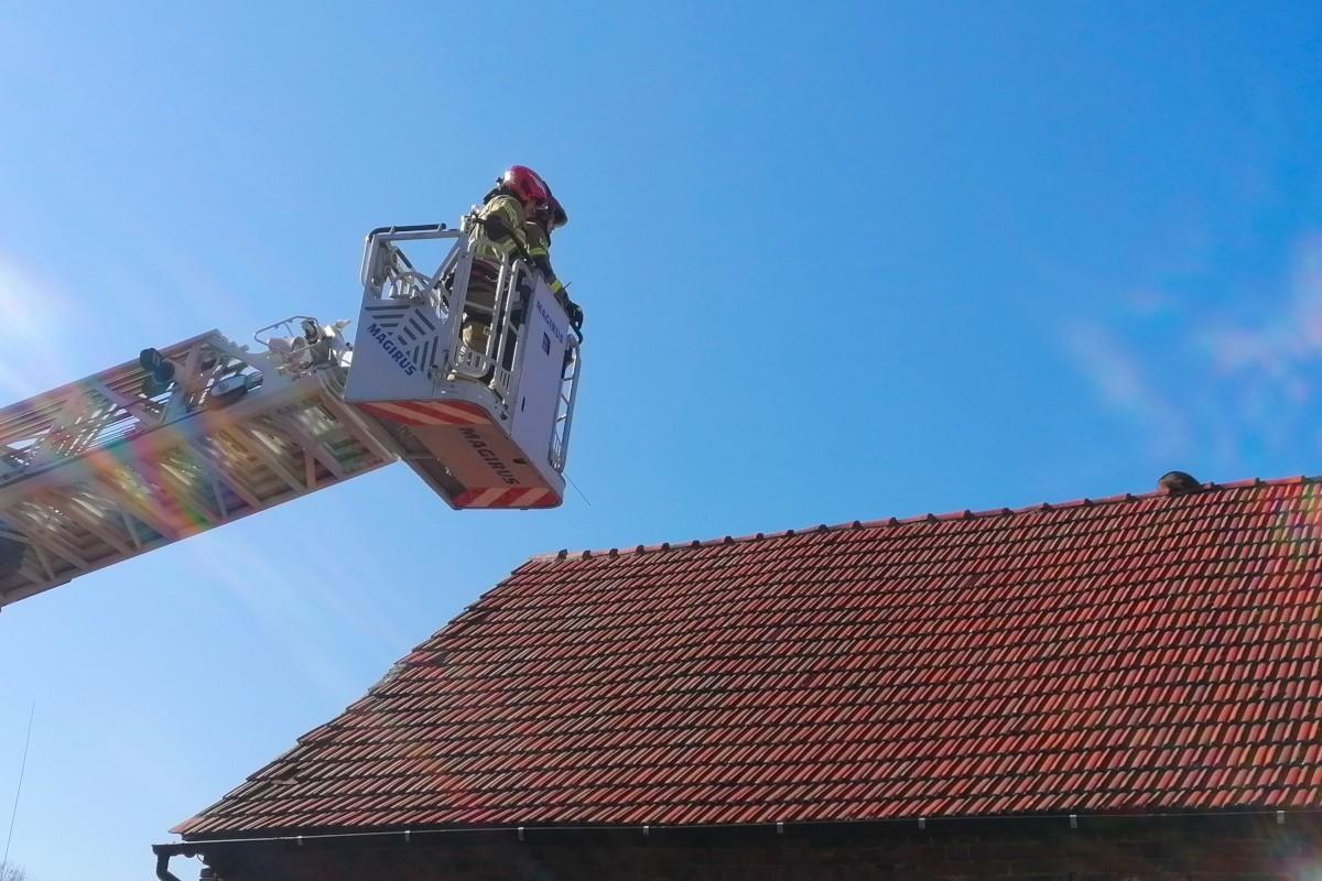 Strażacy i szop pracz na dachu budynku w Czernej